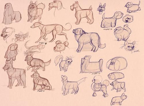 11.27.16 - Dog Show Studies