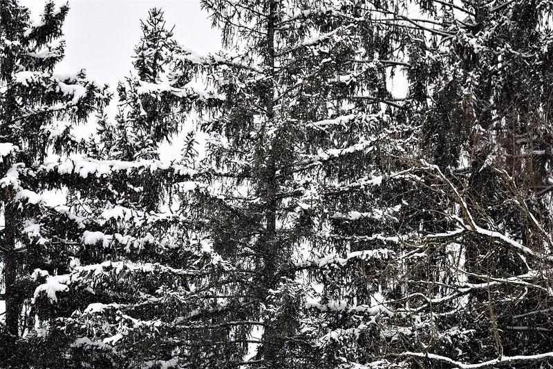 Snow 15.01 (8)