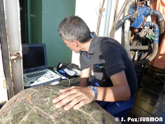 US scan of sea turtle on board a trawler 2