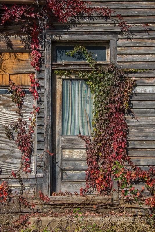 wabi sabi timberville door