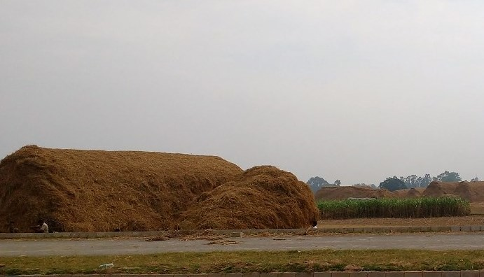 Fodder from rice straw is used only by nomadic communities like the Gujjars.