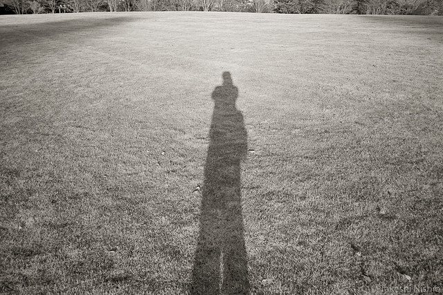 tall in shadow