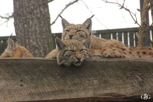 Ausflug Zoo Magdeburg 11.03.2017 Teil. 24