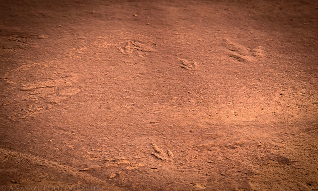 Little Dinosaur Tracks