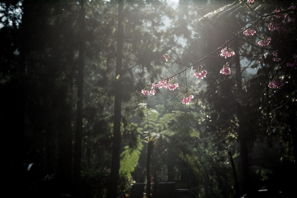 溪頭森林園區