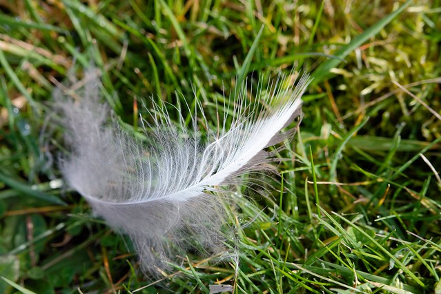 Feather (Knock Me Over)