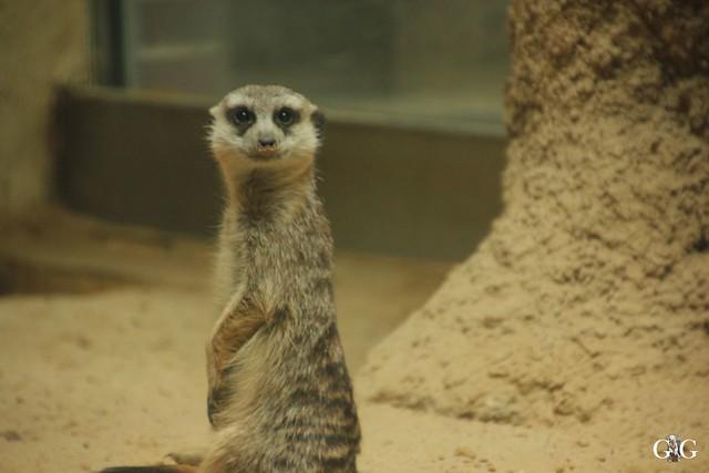 Besuch Zoo Berlin 26.02.201719