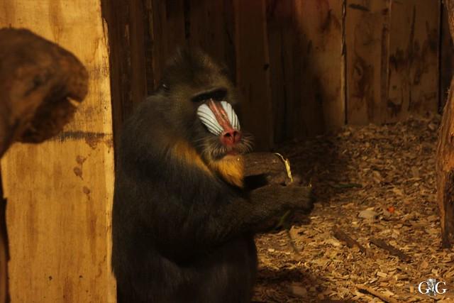 Ausflug Zoo Magdeburg 11.03.17 Teil 1.57