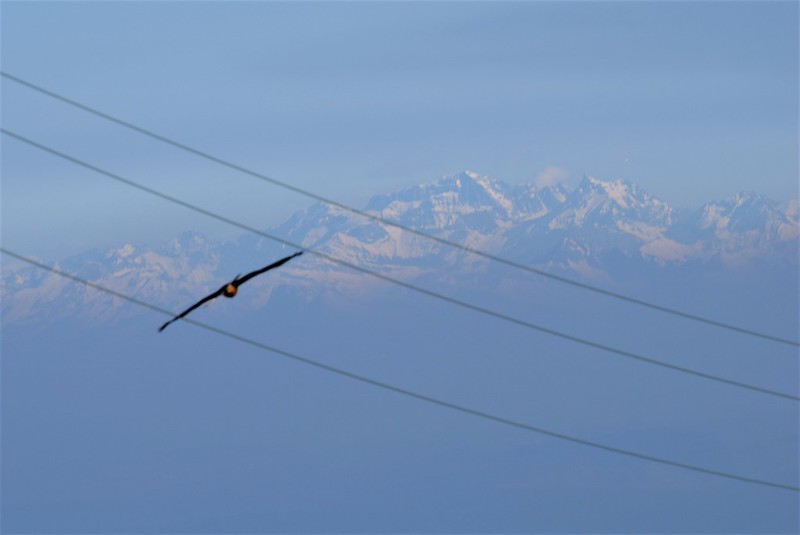 Red Kite 16.03 (2)