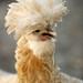 Chicken A Go-Go