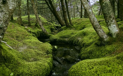 Mossy Stream II | by D. C. Elliott