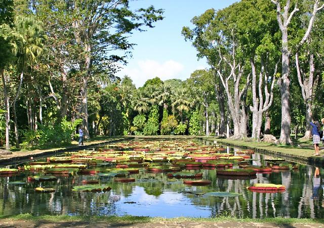 Pamplemousses botanical garden pedro plassen lopes flickr for Jardin pamplemousse