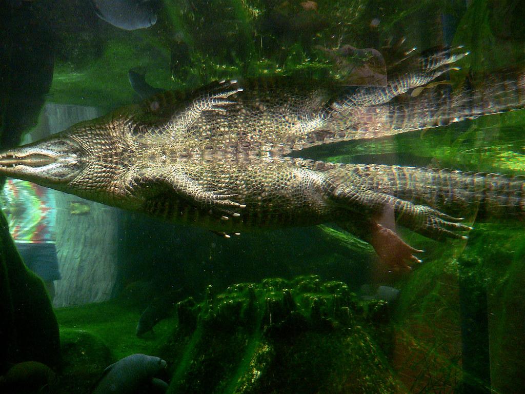 Image Result For North Carolina Aquarium