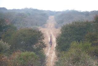 Reserva Natural Manavhela Ben Lavin, Africa do Sul