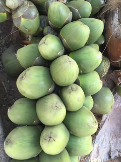 Immature Coconuts in The Gambia | by Tjeerd