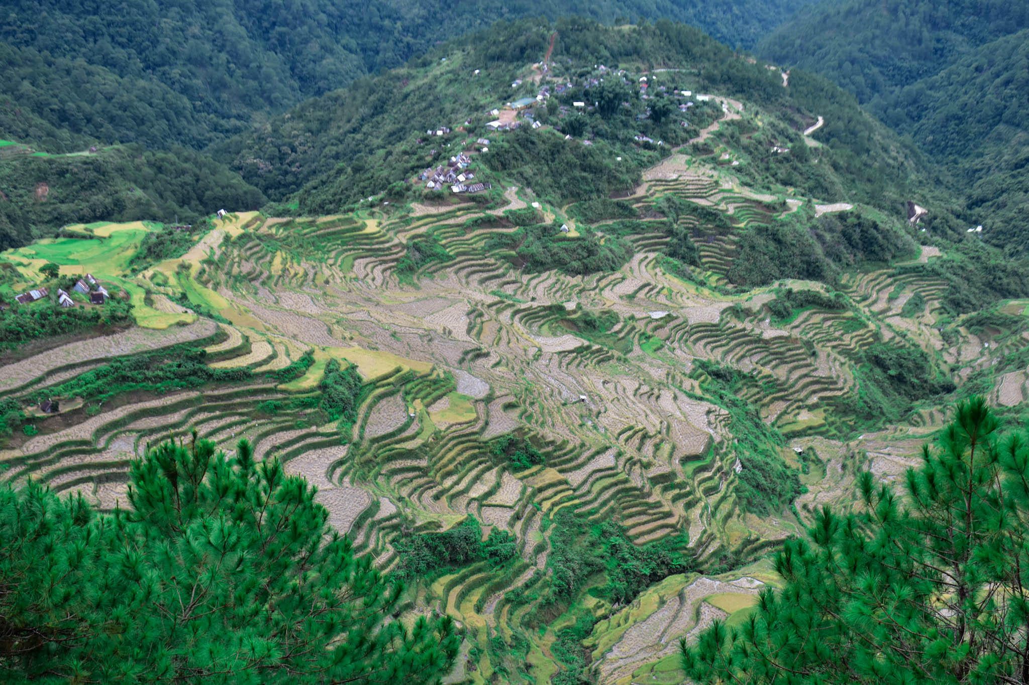 MALIGCONG RICE TERRACES 7 (1 of 1)