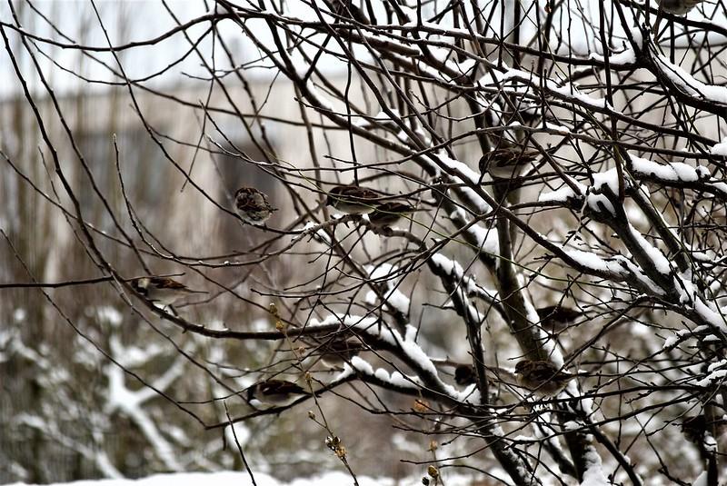 Sparrows 13.01 (21)