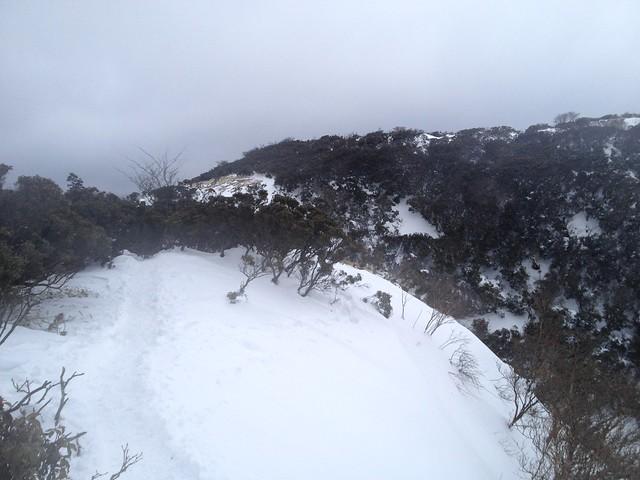 入道ヶ岳 井戸谷分岐への道