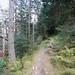 Woodland Path, Stank Glen