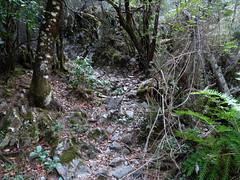 Le départ du chemin non trouvé à l'aller en RD de l'Ancinu et prolongeant le vieux chemin historique