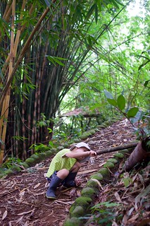 among the giant bamboo trees | by mirka s.