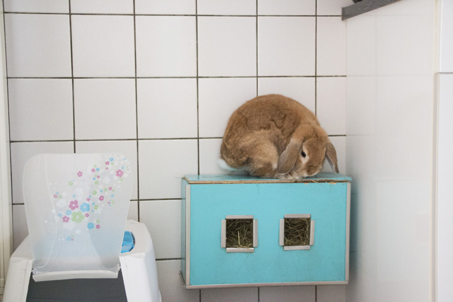 Bunny snapshots #8