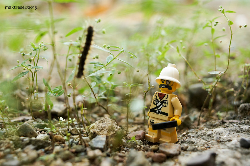Lego Explorer found a furry critter