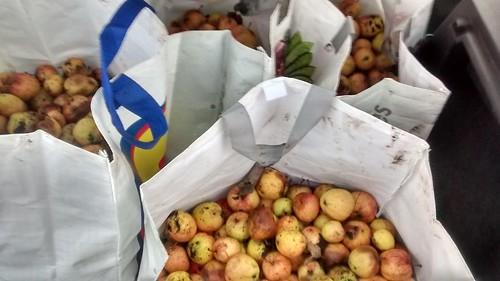 apples Jan 17 (1)
