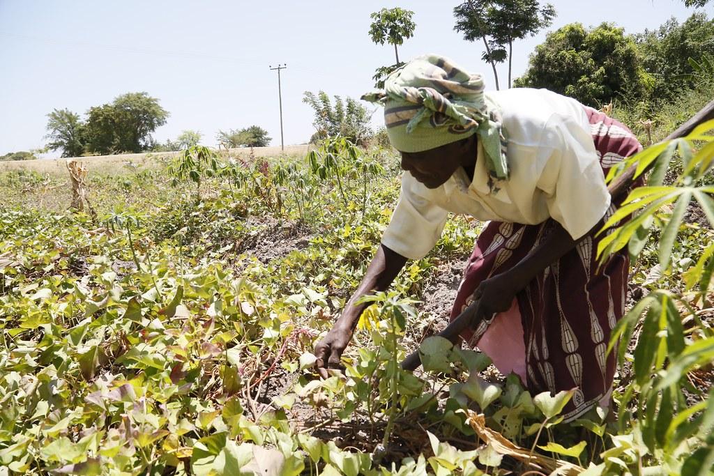Image result for farmer