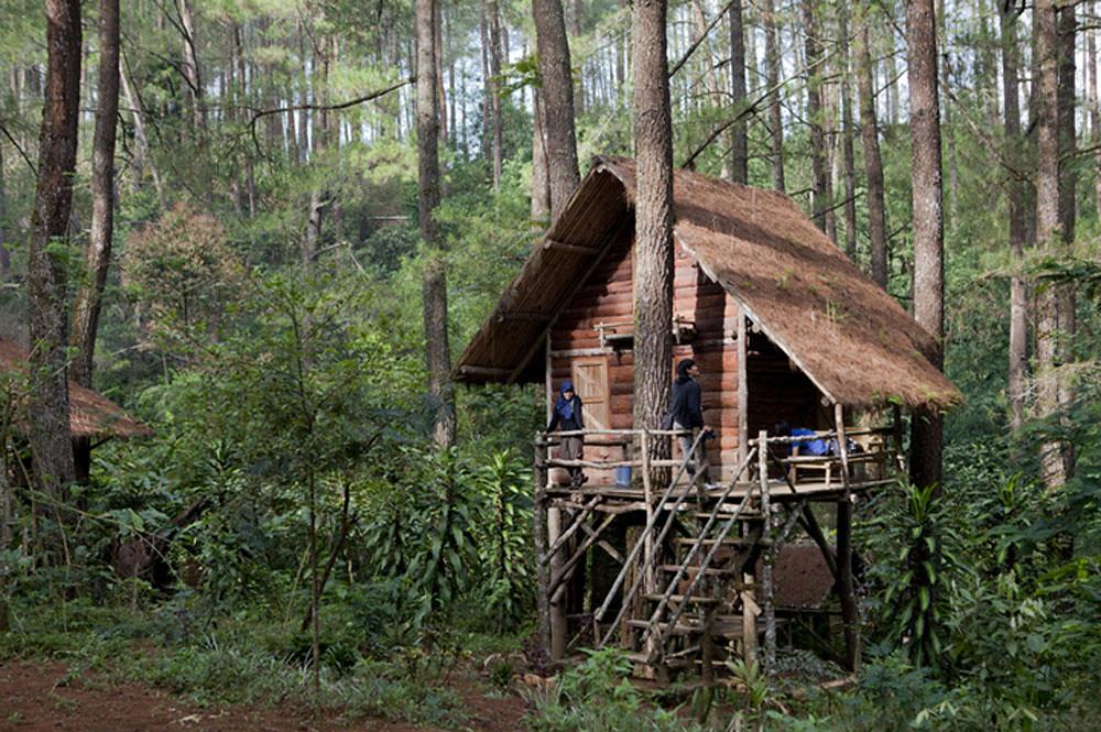 5-rumah-pohon-via-nationalgeographic