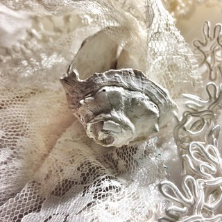 #conchshell #lace #textures #shadesofwhite #ig_treasures         Just because it's pretty... | by paulateachstm