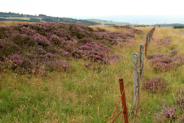 Moorlands at Sherrifmuir, near Stirling
