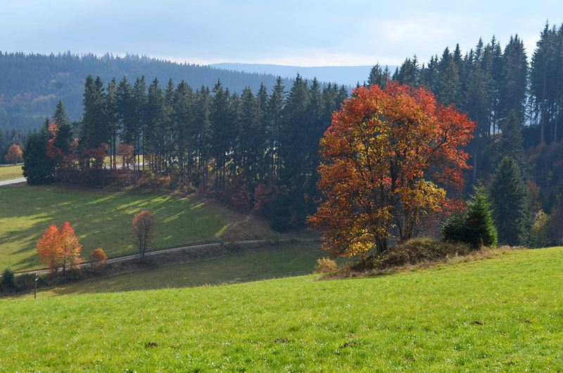 The Copper  tree, Falkau, Black Forest, Germany