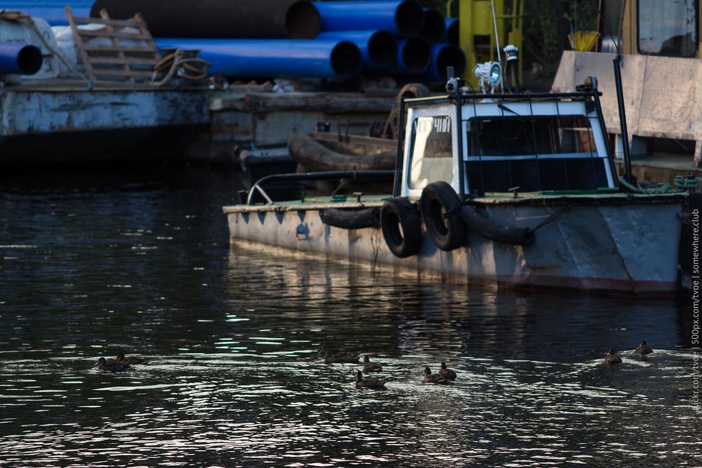 Уточки и катер около Новой Голландии в Петербурге