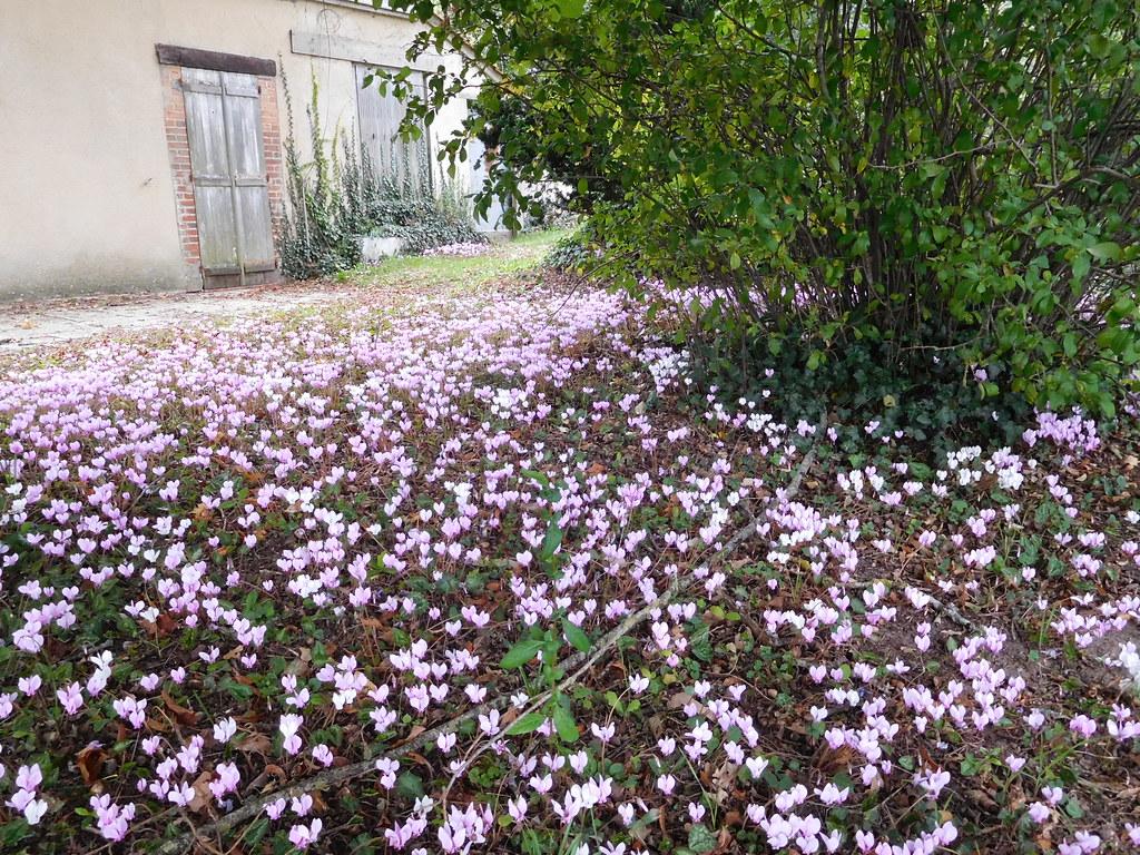 Parterre fleuri en automne ni vre france jpc24m flickr for Parterre 3d