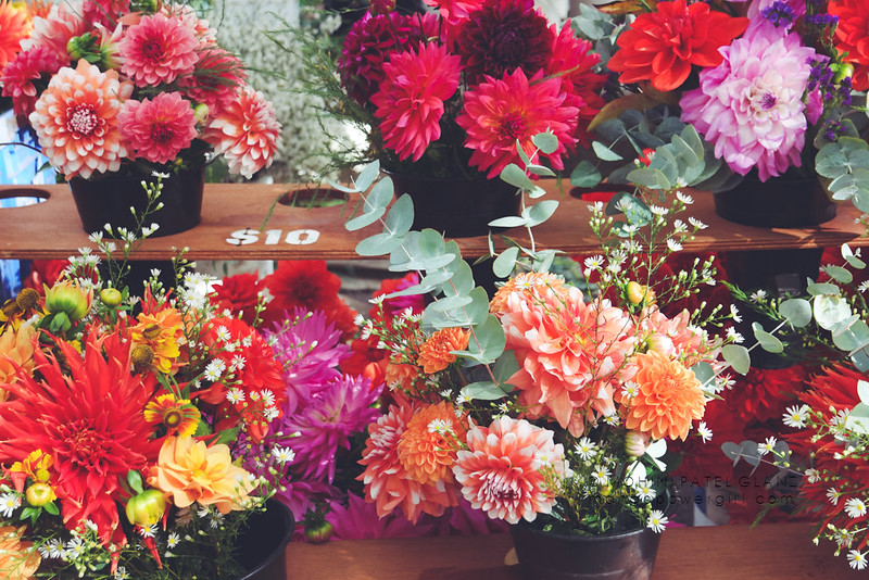 dahlia bouquets at portland farmers market