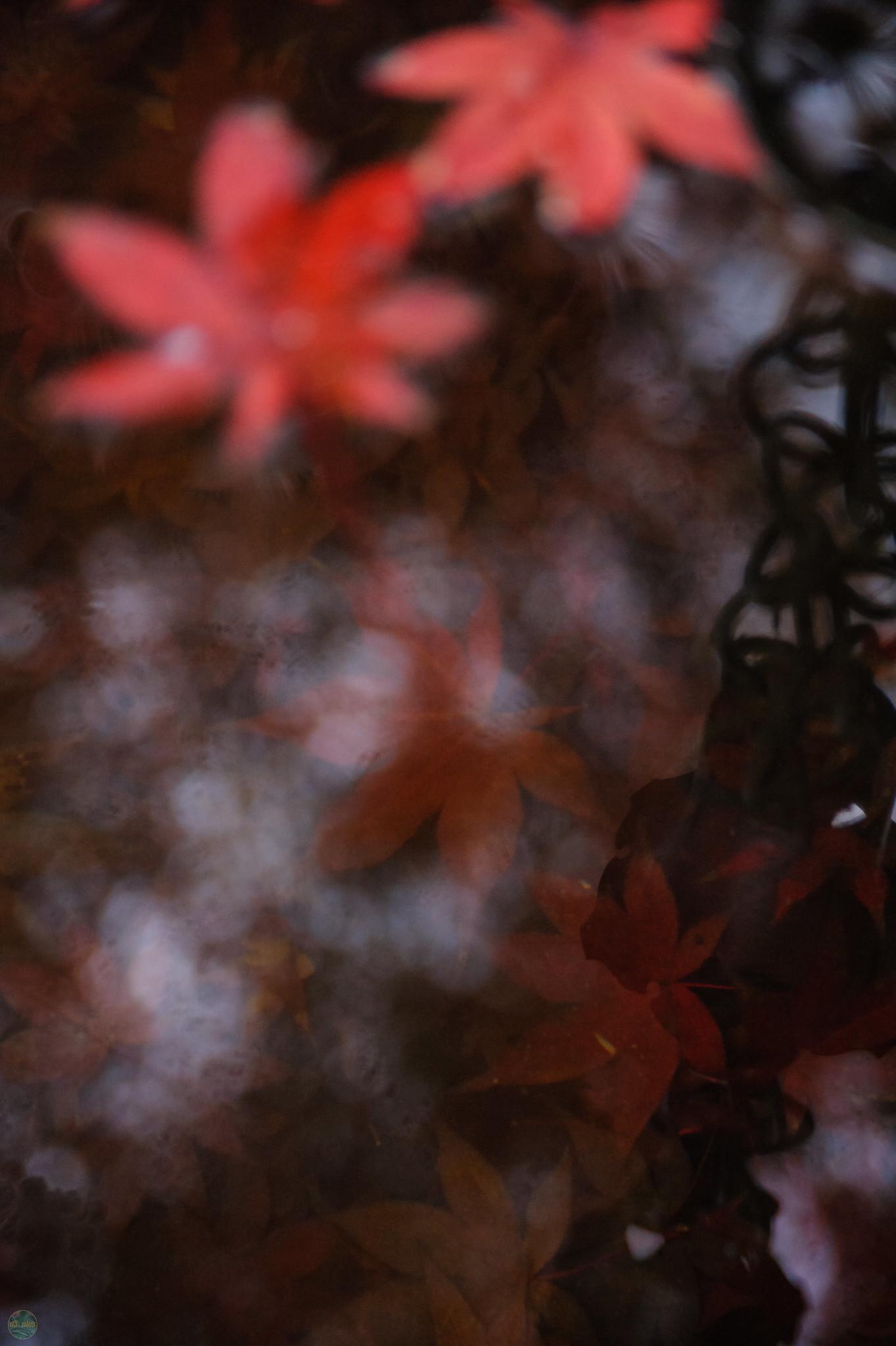 flickr d3_plus