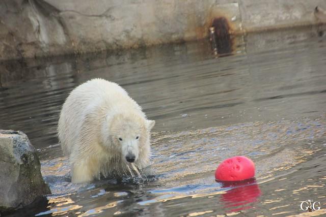 Besuch Zoo am Meer 29.12.201618