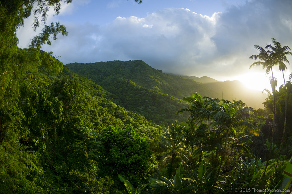 El Yunque National Forest Guided Tours