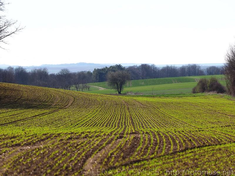 Spring Landcape 1