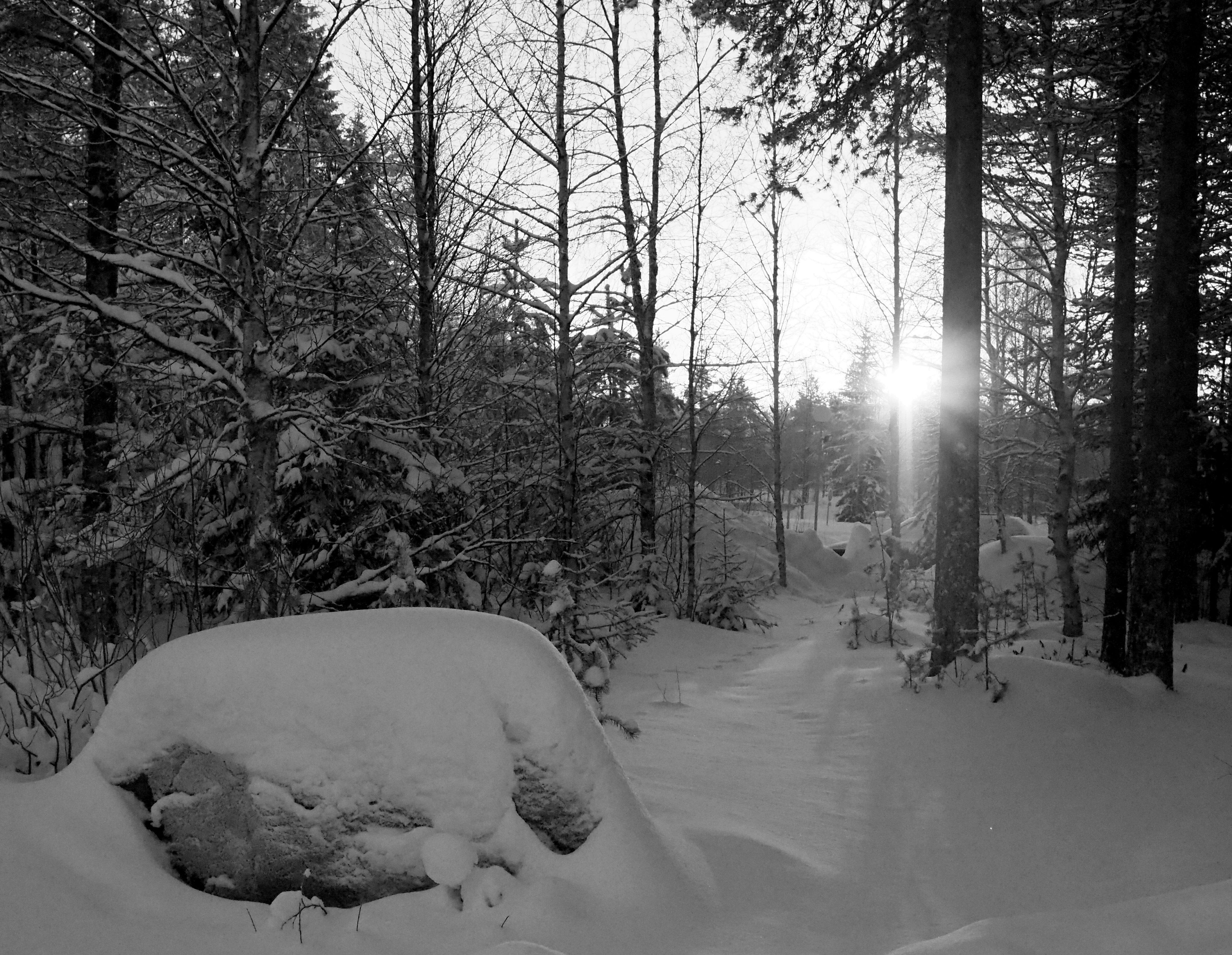hiljaisuus metsä mustavalko