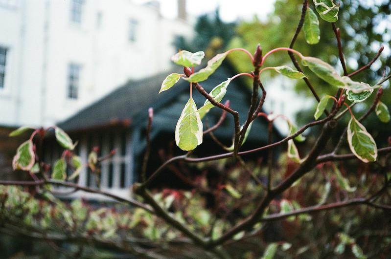 Leaf focus