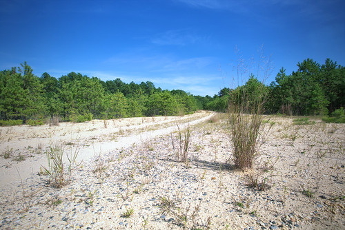 preservation of the pine barrens Thus, a mini-city will clear-cut pine barrens forest, level knolls and high ground and fill in wetlands, destroying natural habitat in the area once known as hickory swamp.