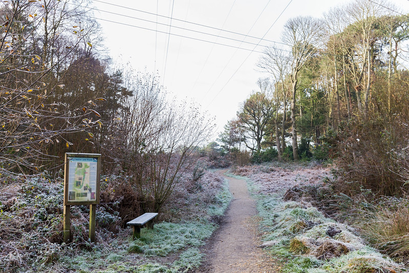 Entrance to a frozen heath