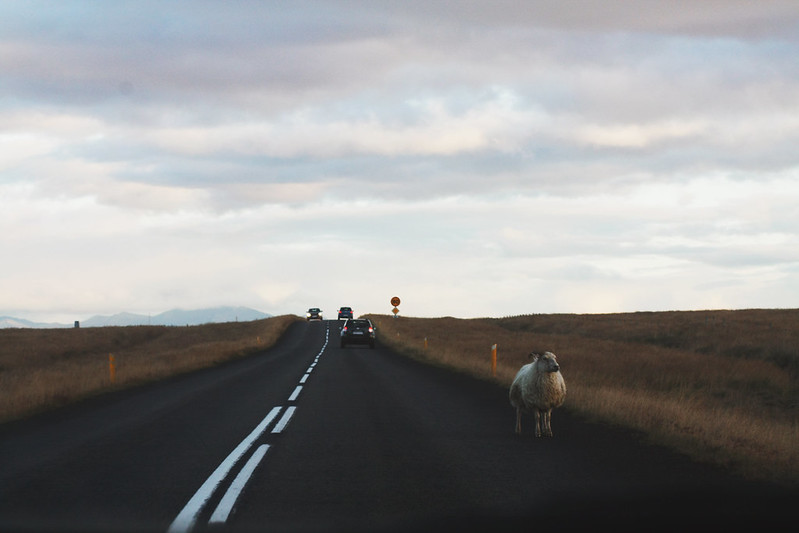 Ordinary day in Iceland