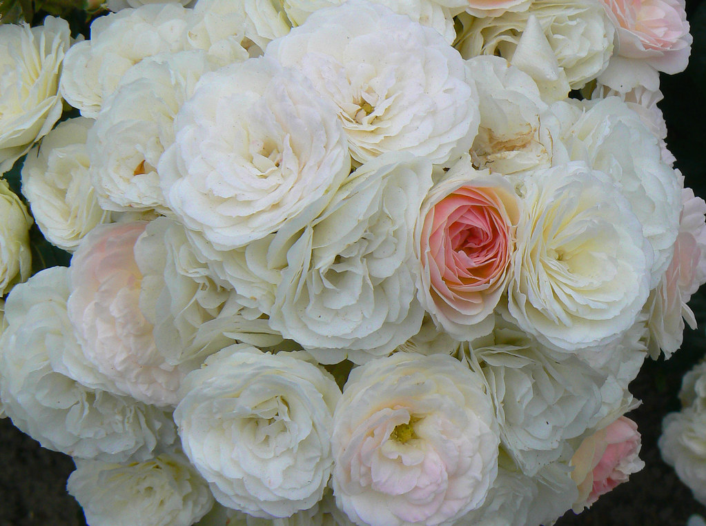 bouquet parfait the rose bouquet parfait was created in flickr. Black Bedroom Furniture Sets. Home Design Ideas