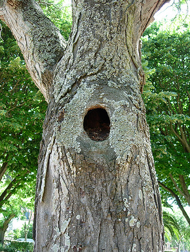 Tree Hole I Have Always Loved Trees With Holes Ever