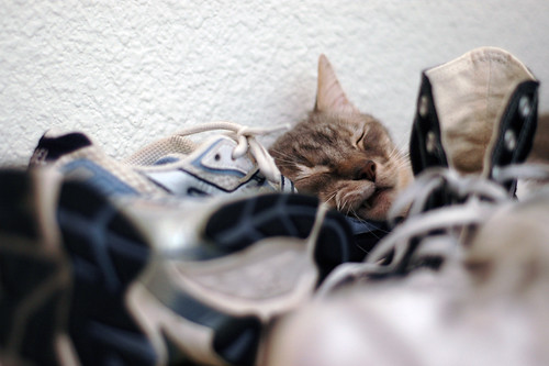 Jasper asleep in a forest of shoes 2 | by silent (e)