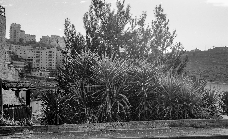 נוף עם צמחייה