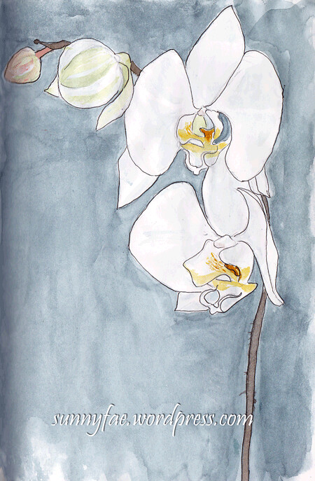 Orchid watercolour sketch